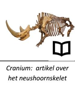 image_cranium-artikel over het neushoornskelet