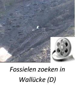 image_fossielen zoeken in Wallucke