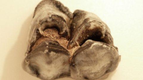 Kies Reuzenhert legt vegetatie bloot (vroege vogels bnnvara)